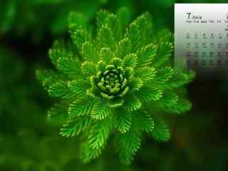 2017年7月日历清新绿色植物图片壁纸
