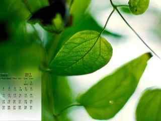 2017年7月日历绿色树叶桌面壁纸