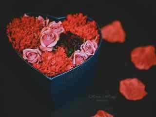 唯美好看的玫瑰花