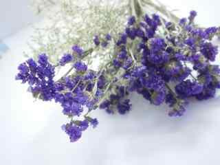 小清新好看的紫色