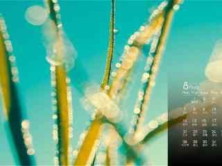 2017年8月日历小清新植物微距摄影壁纸