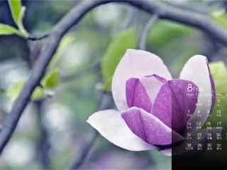2017年8月日历美丽的花朵桌面壁纸