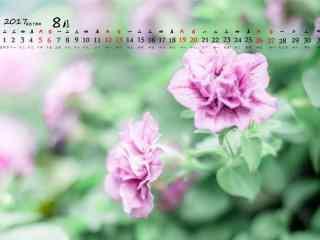 2017年8月日历唯美鲜花图片壁纸