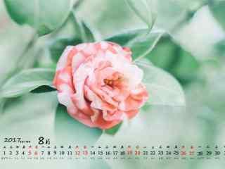 2017年8月日历唯美植物图片壁纸