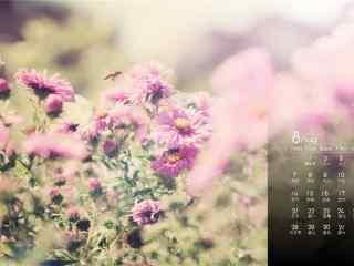 2017年8月日历美丽的野花桌面壁纸