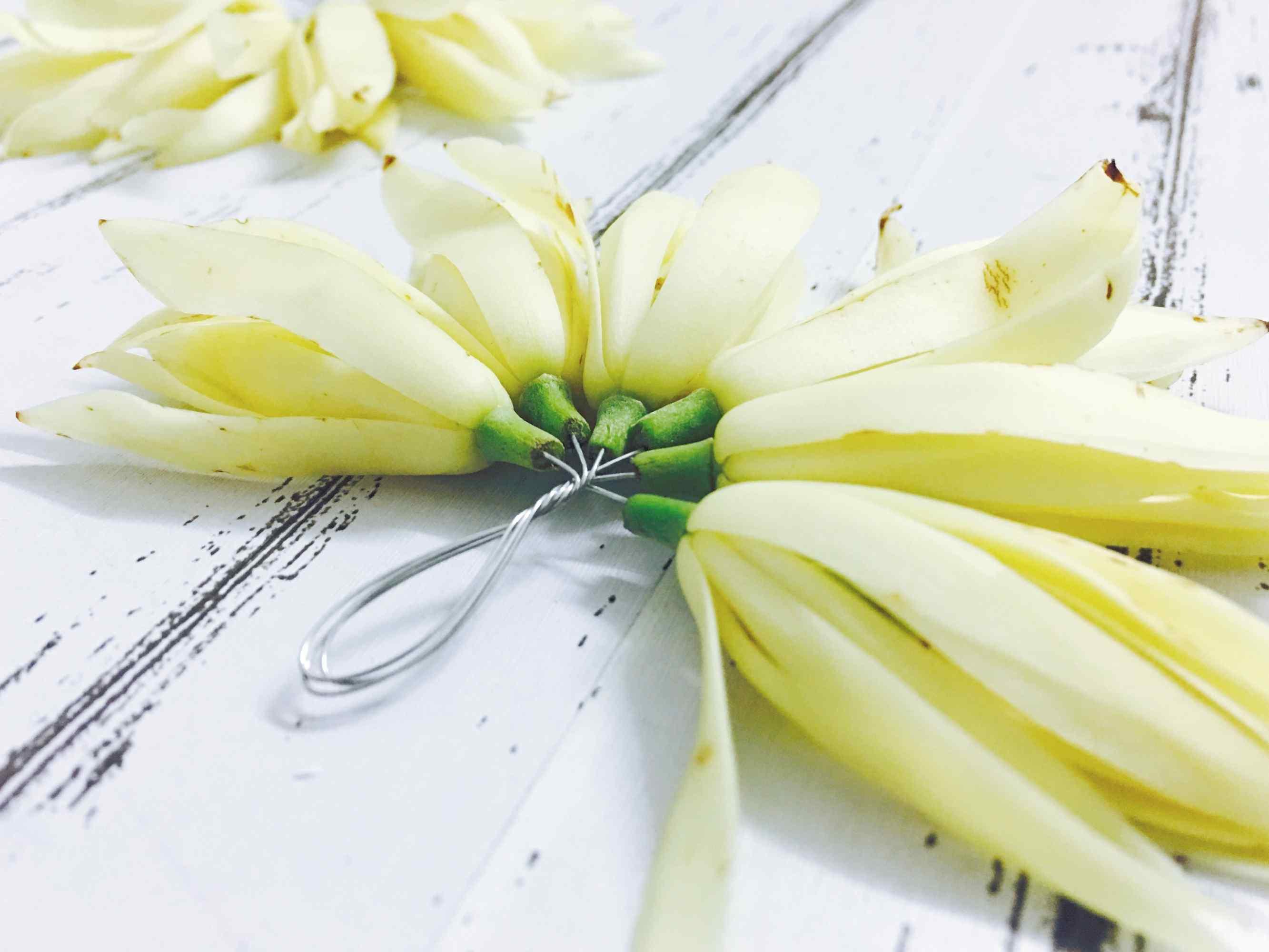 小清新简约好看的白兰花桌面壁纸