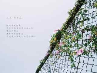 小清(qing)新日系圍欄(lan)上的牽牛花桌面壁(bi)紙
