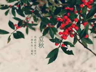 立秋植物桌面壁纸