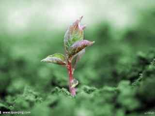 植物壁纸,无水印,