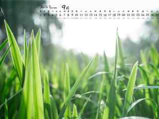 2017年9月日历绿色清草地桌面壁纸