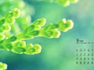 2017年9月日历小清新绿色植物护眼壁纸