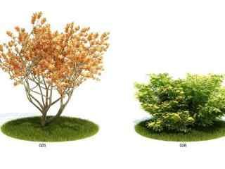 室外植物模型_桌