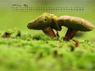 2017年9月日历蘑菇桌面壁纸