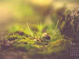 2017年9月日历文艺唯美的小草与蜗牛壁纸