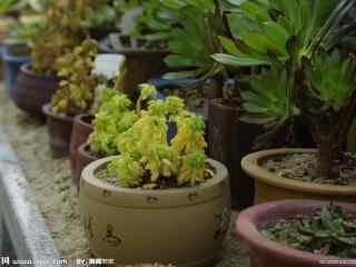 热带盆栽植物图片