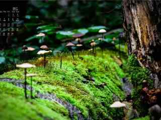 2017年9月日历可爱的蘑菇桌面壁纸