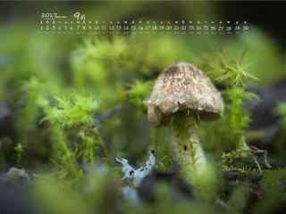 2017年9月日历清新的蘑菇桌面壁纸