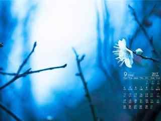2017年9月日历微距摄影植物壁纸