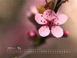 2017年9月日历唯美桃花桌面壁纸