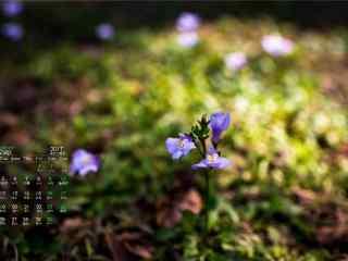 2017年9月日历小清新植物护眼壁纸
