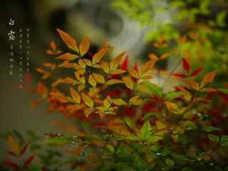 2017白露节气之唯美树叶壁纸