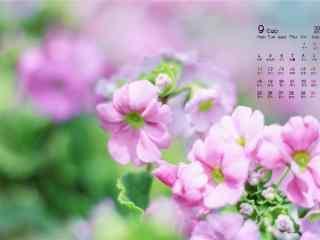 2017年9月日历可爱小清新花朵壁纸