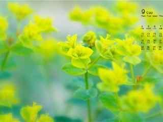 2017年9月日历美丽的油菜花田壁纸