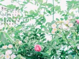 2017年9月日历小野花桌面壁纸