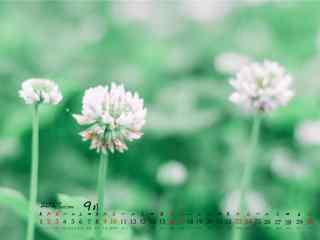 2017年9月日历美丽的小野花壁纸