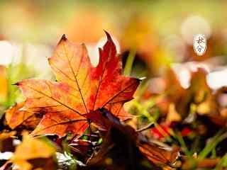 秋分节气之红叶唯美壁纸