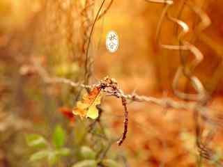 秋分节气之落叶图片壁纸