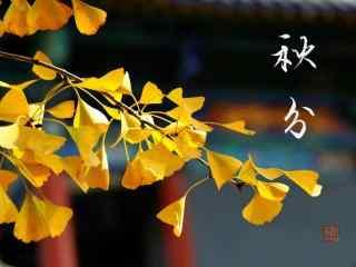 黄色枫叶之秋分节气桌面壁纸