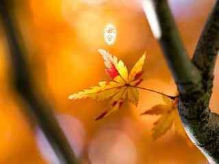 秋日叶子之秋分节气桌面壁纸
