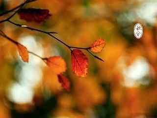 秋分节气之唯美树叶壁纸