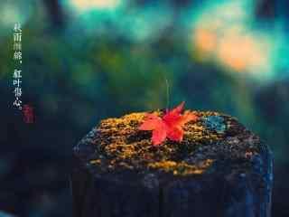 秋分节气之唯美植物壁纸