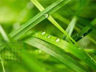 2017年10月日历清新植物护眼壁纸