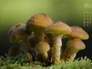 2017年10月日历可爱的小蘑菇图片壁纸