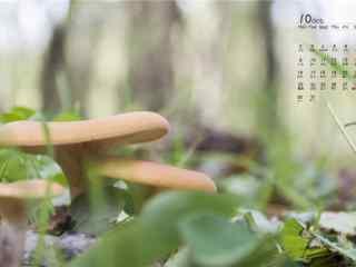 2017年10月日历草地上的蘑菇图片壁纸