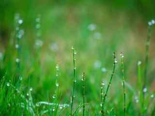 寒露节气绿色草地上的水珠桌面壁纸