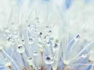 寒露节气唯美植物海报壁纸
