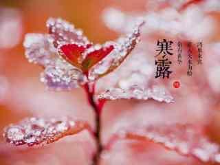 2017年寒露节气水珠植物海报壁纸
