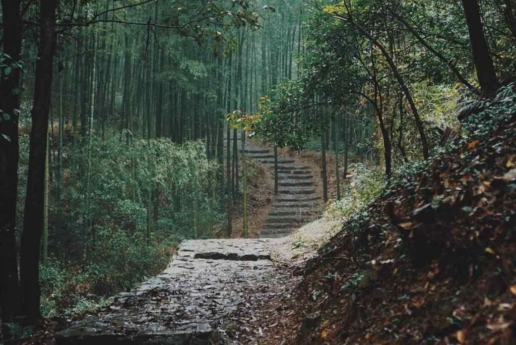 小清新绿色竹林图片壁纸