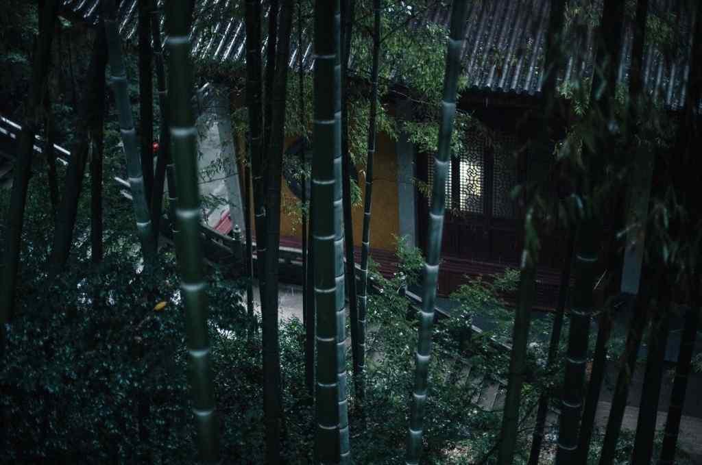 小清新竹林护眼桌面壁纸