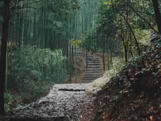 小清新绿色竹林图