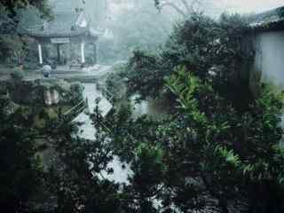 美丽的绿色竹林图片壁纸