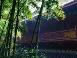 美丽的竹林护眼桌面壁纸