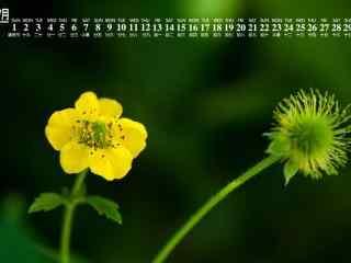 2018年7月日历壁纸高清植物花卉图片护眼壁纸