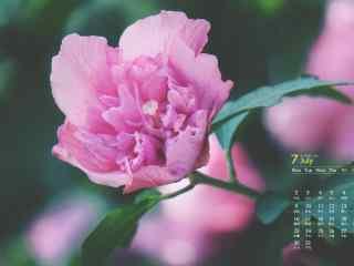 2018年7月日历壁纸养眼花卉高清清新壁纸