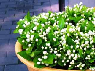 花团锦簇含苞待放