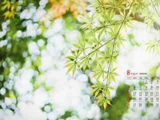 2018年8月日历壁纸唯美清新绿色植物护眼壁纸